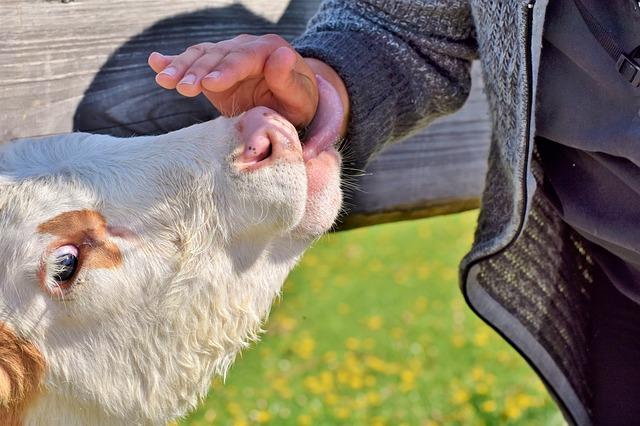 Trumpové kroky proti Kanadským farmárom